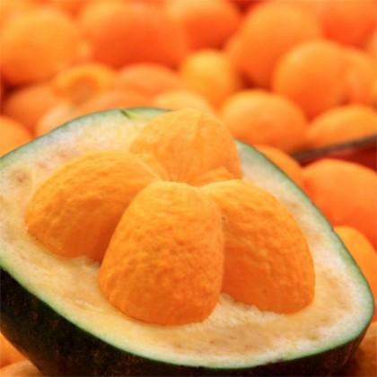 Oleo Vegetal de Pequi 100 ml